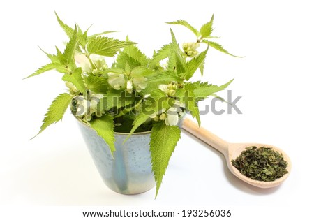 Fresh stinging nettles with white flowers in blue cup and heap of dried nettle on wooden spoon. Isolated on white background - stock photo