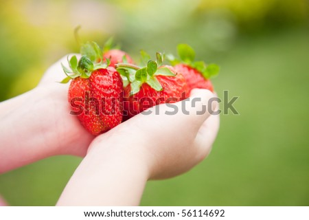 Fresh strawberries in the hands of a child - stock photo