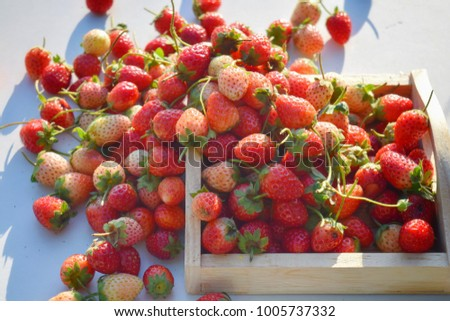 fresh strawberry fruit background