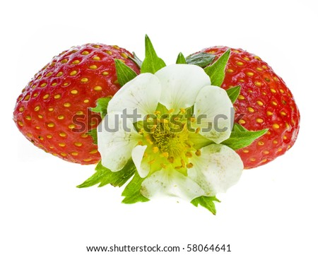 fresh strawberry fruits with flowers and green leaves isolated