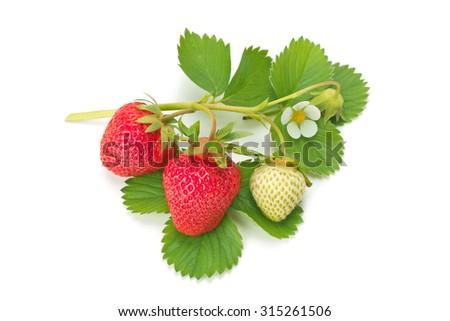 fresh strawberry isolation on a white background - stock photo