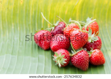 Fresh strawberry on banana green leaf - stock photo