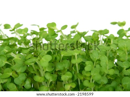 Fresh summer cress, healthy salad garnish food isolated over white, macro close up - stock photo
