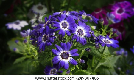 fresh summer flowers in nature - stock photo