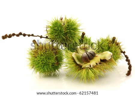 fresh sweet chestnuts on a white background - stock photo