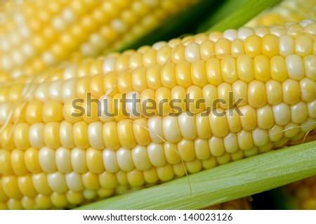 fresh sweet corn in cob - stock photo