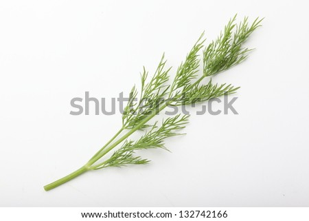 Fresh tasty dill  isolated on white background
