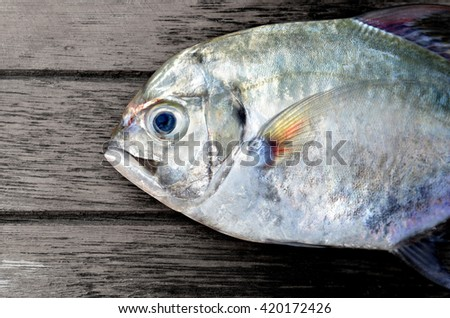fresh Threadfin jack fish from fishery market this fish have a good meat it's very delicious seafood photo in outdoor sunlight