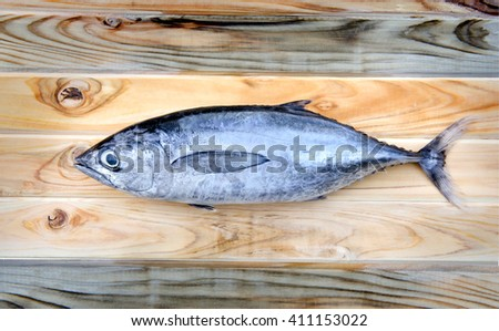 fresh thunnus fish for cooking from asian fishery market - stock photo