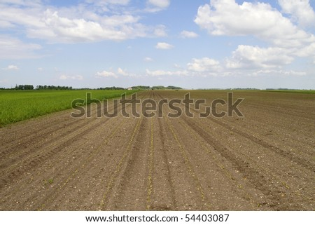 Fresh tilled field with a cloudy sky