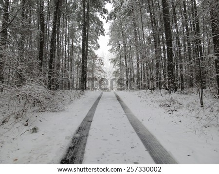 Fresh tire tracks on a snow covered rural road through a forest - stock photo