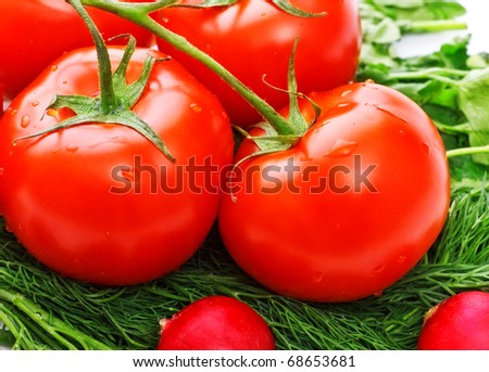 fresh tomatoes and greens for salad, closeup - stock photo