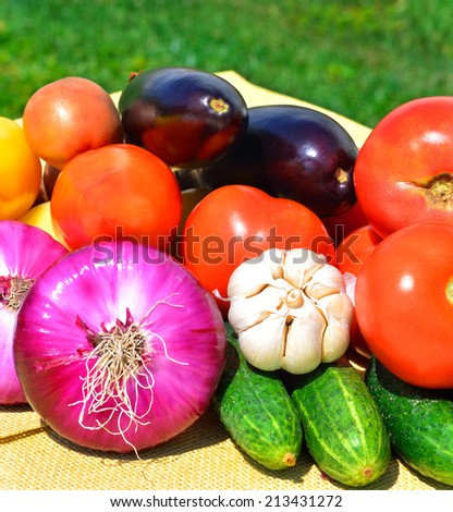 Fresh tomatoes, garlic, red onion, cucumbers and aubergines on green grass - stock photo