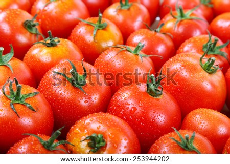 Fresh tomatoes in drops of dew as a background. - stock photo