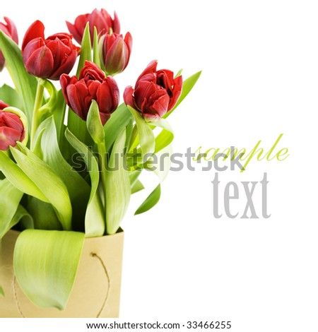 fresh tulips on white background with sample text - stock photo