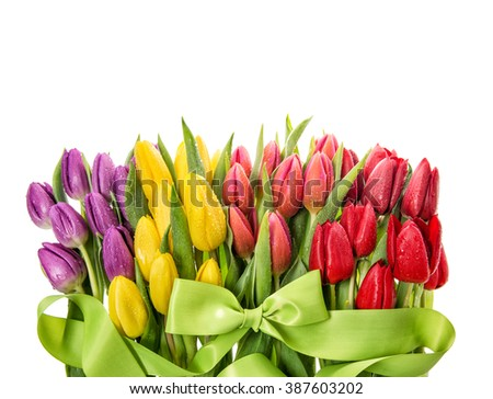 Fresh tulips. Spring flowers with water drops on white background - stock photo