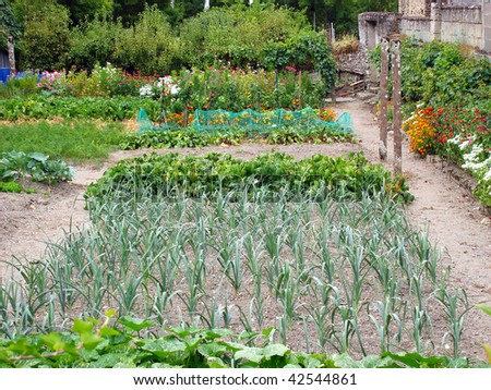 Fresh vegetables growing in an allotment - stock photo