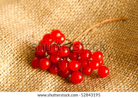 Fresh viburnum on a sack - stock photo