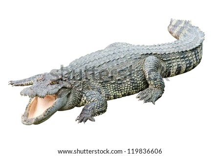 Fresh water adult crocodile from Thailand, taken on a cloudy day - stock photo