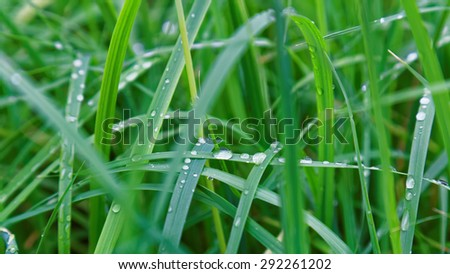 Fresh water drop on green grass leaf after rain. Selective focus on the waterdrop. - stock photo