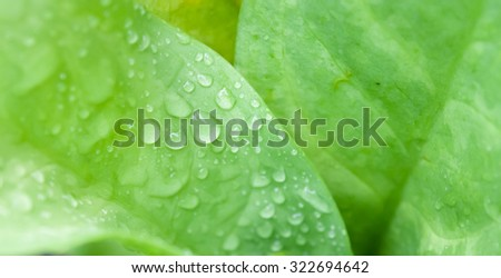 Fresh water drop on green leaf background - stock photo