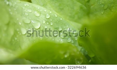 Fresh water drop on grenn leaf background - stock photo