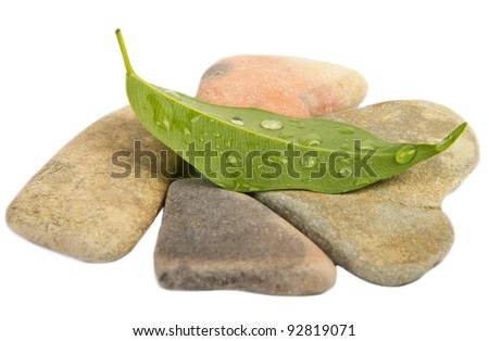 Fresh Water Drops on green leaves and stones