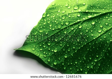 Fresh Water Drops on Green Plant Leaf - stock photo