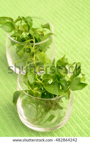 Fresh watercress (aquatic plant) in a glass,organic vegetable,clean eating