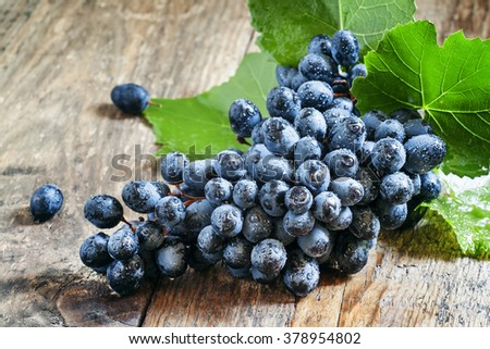 Fresh wet dark blue grapes with leaves and vines on an old wooden table in rustic style, selective focus