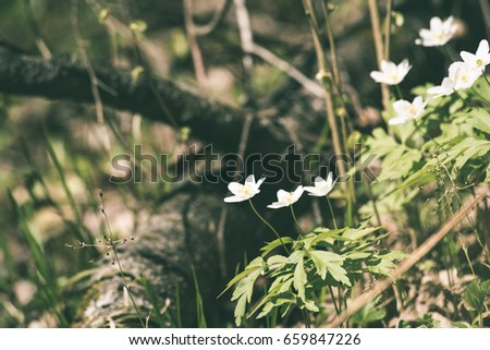 Fresh White Flowers And Blossoms In Spring Blooming Natural Environment With Insects