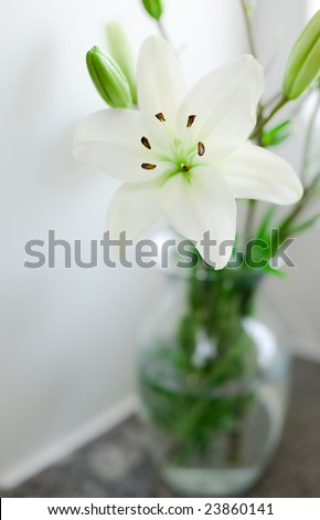Fresh white lilies in a glass vase. Shallow depth of focus with copy space. - stock photo