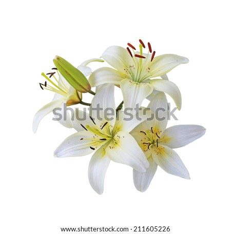 Fresh white lily flowers branch isolated on white - stock photo