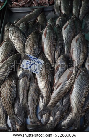 Ctenopharyngodon idella stock images royalty free images for Fish stocking prices