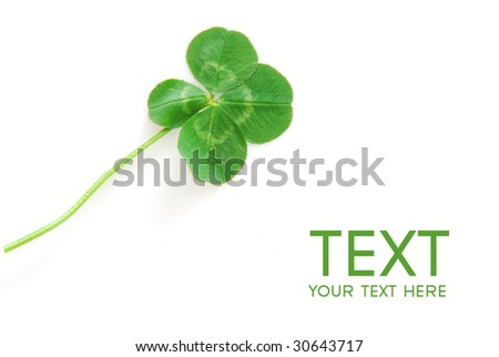 Fresh wild lucky clover isolated on white background - symbol of holiday St. Patrick's Day - stock photo