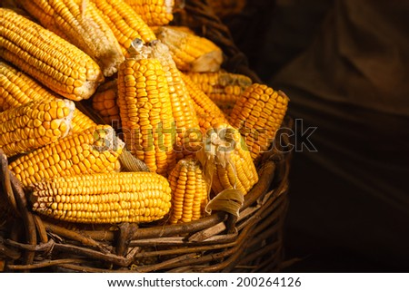 Fresh Yellow Corn In Basket On The Dark Background. Harvest Agricultural Concept - stock photo
