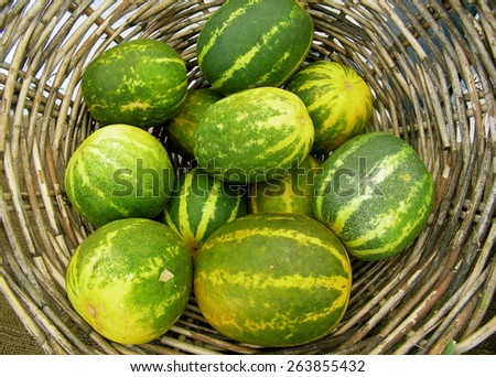 Fresh yellow cucumber in the basket - stock photo