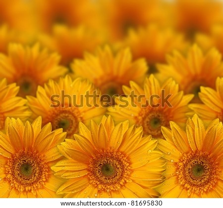 Fresh yellow flower background with dew props