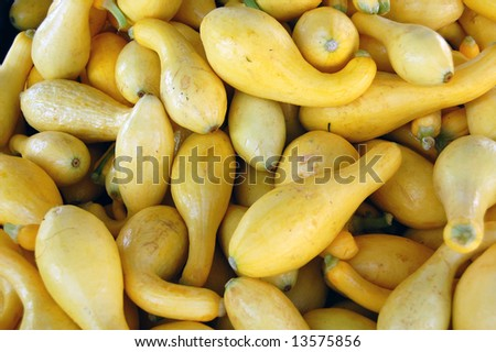 fresh yellow squash - stock photo