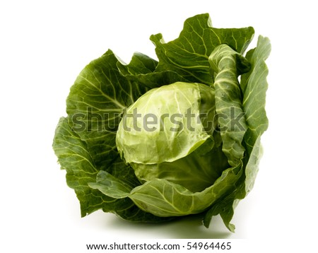 Fresh young cabbage on white background - stock photo