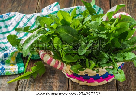 Fresh young dandelion leaves in a basket, gathered for the preparation of the spring vitamin salad - stock photo