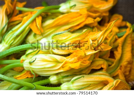 Fresh Zucchini Flowers - stock photo