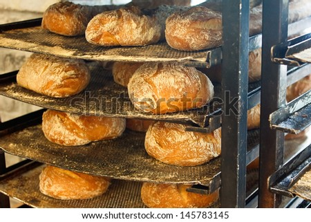 Freshly baked artisanal rustic bread loafs on battered bakers trays