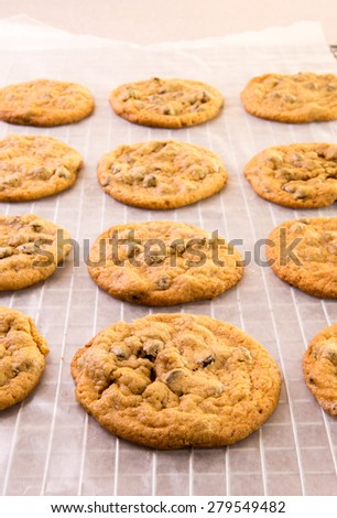 Freshly baked chocolate chip cookies from the oven cooling on a rack. - stock photo