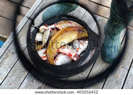 Freshly caught fish in fishing net on wooden background. Fisherman holding fishing net.  - stock photo