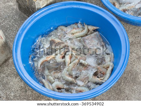 Freshly caught shrimp in a bucket with ice at the floting market. - stock photo