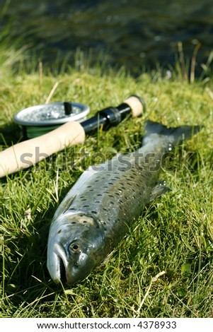 Freshly caught trout lying on the riverbank with fishing rod - stock photo