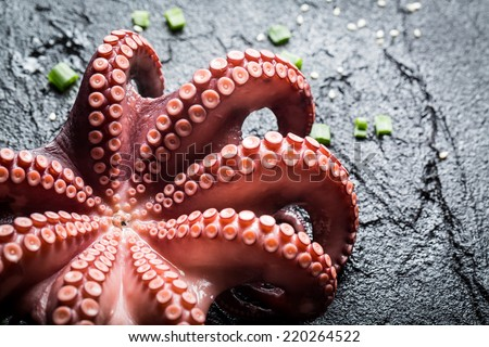 Freshly cooked purple octopus - stock photo
