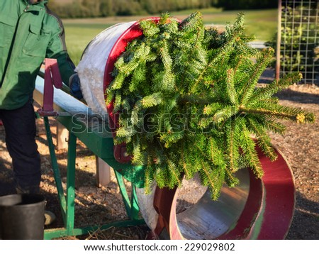 Freshly cut Christmas tree being wrapped up by the salesman, no faces or logos - stock photo