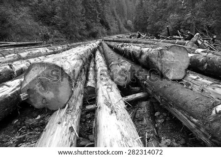 Freshly cut tree logs piled up near a forest road - stock photo